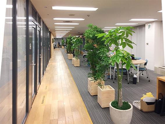 オフィス緑化の例:グリーンレンタル